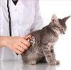 Ветеринарные клиники в Ясном